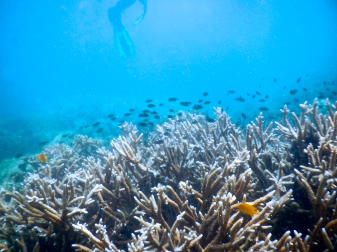 Underwater of Tanjung Putus Island