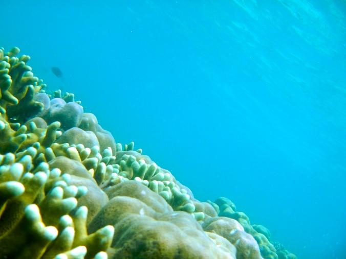 Underwater of Pahawang Kecil Island