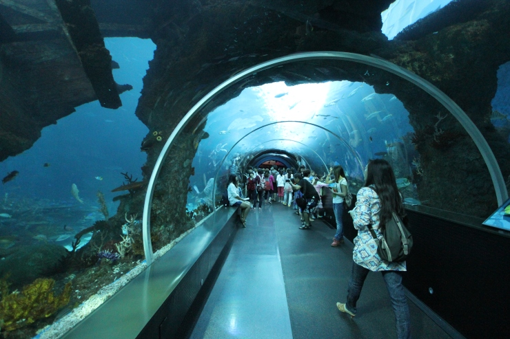 Part of SEA Aquarium