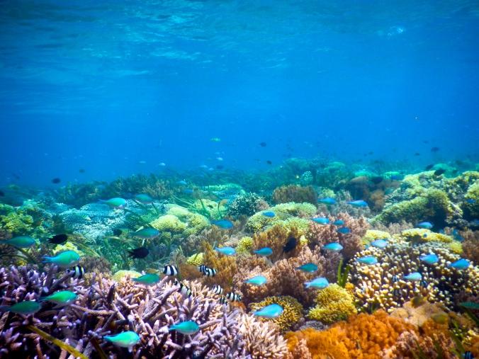Underwater of Gili Kondo