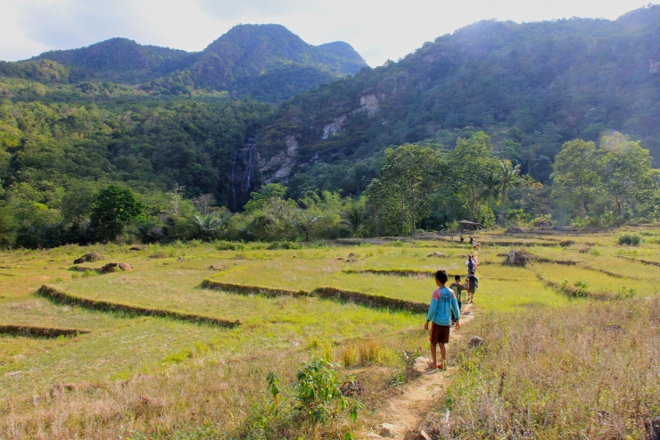 dry paddy field near the waterfall