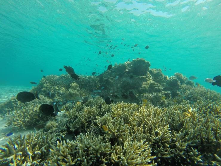 Underwater Sebayur Island