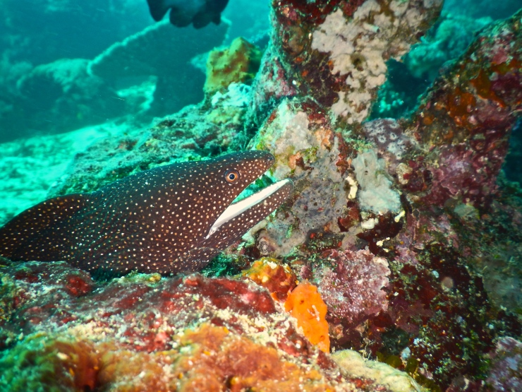 Moray Eel in the dive spots called the cosmos reef
